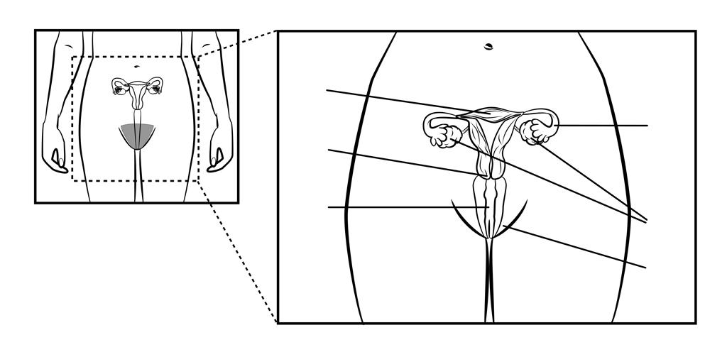 Female Reproductive System - Gdhr Portal-1541